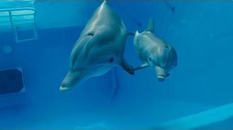 Dolphin Tale 2 - Official Teaser Trailer HD