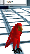 Avatar- Macaw