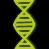 Genetic mutation.png