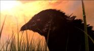 Thrall's Vision Crow Closeup