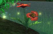 Rain Poppy