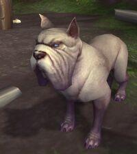 Image of Humphrey
