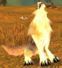Image of Prairie Wolf