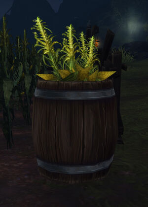 Barrel of Corn.jpg