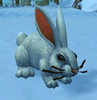 Image of Alpine Hare