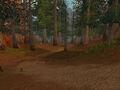 Webwinder Path.jpg