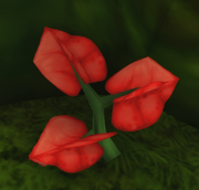 Flower of Felicity.png