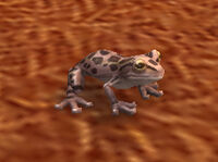 Image of Toad