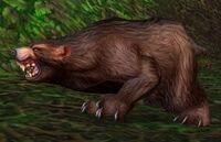 Image of Ashenvale Bear