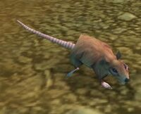 Image of Dig Rat