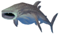 Whale shark.png