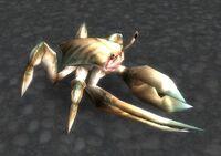 Image of Young Reef Crawler
