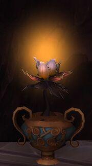 Everglow Seedling.jpg
