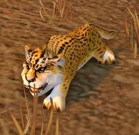 Image of Cheetah Cub