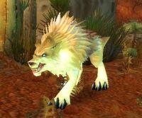 Image of Rabid Crag Coyote