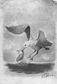 Traveler Seagull.jpg