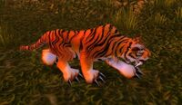Image of Stranglethorn Tiger