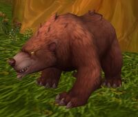 Image of Young Forest Bear