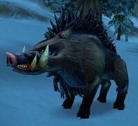Image of Elder Crag Boar