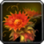 Inv misc herb heartblossom.png