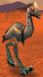 Image of Greater Plainstrider
