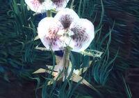 Image of Riot Blossom