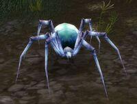 Image of Pygmy Venom Web Spider