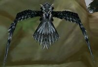 Image of Trained Rock Falcon