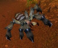 Image of Deepmoss Creeper