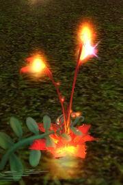 Cinderbloom.jpg