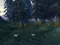 Moongraze Woods.jpg