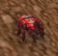 Image of Dung Beetle