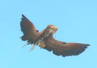 Image of Eonar Bird