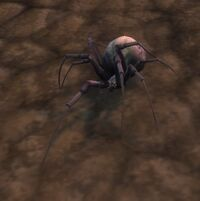 Image of Ash Spiderling