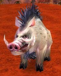 Image of Elder Mottled Boar