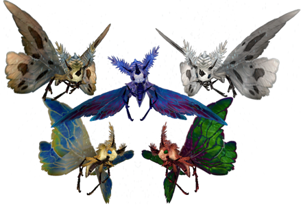 A group of various moths