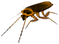 Roach.png