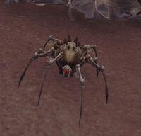Image of Sandspinner Spiderling