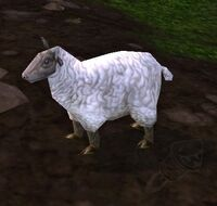 Image of Sheepie