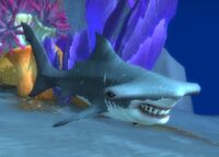 Image of Spinescale Hammerhead