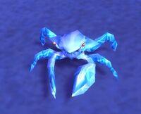 Image of Moonshell Crab