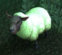 Image of Ewe