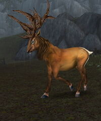Image of Brown Stag