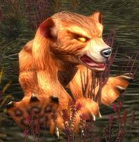 Image of Thistle Bear Cub