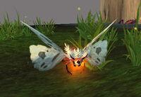 Image of Flamering Moth