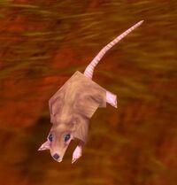 Image of Redridge Rat