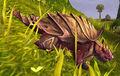 Wyrmhorn Turtle.jpg