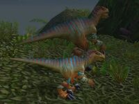 Image of Young Stranglethorn Raptor