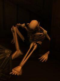 Image of Cursed Pirate