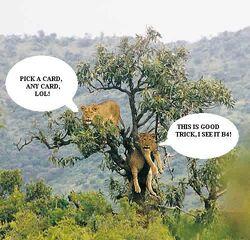 Trick-tree.jpg